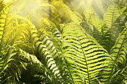 Mythja Posters - Fern leaves Poster by Mythja  Photography