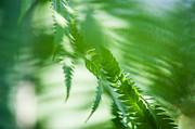 Jenny Rainbow - Fern Leaves Twist. Healing Art