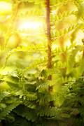 Mythja  Photography - Fern plant