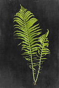 Ostrich Fern Framed Prints - Fern Series Three Framed Print by Di Kerpan