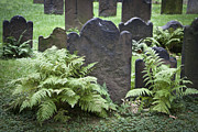 Headstones Framed Prints - Ferns and Headstones Framed Print by Teresa Mucha