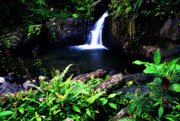 Puerto Rico Art - Ferns Flowers and Waterfall by Thomas R Fletcher