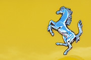 Ferrari Horse Print by Tim Gainey