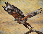 Wildlife Pyrography Prints - Ferruginous Hawk Print by Russell Dudzienski