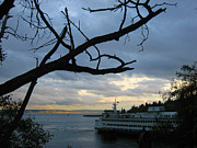 Tree In Background Framed Prints - Ferryboat To Seattle  Framed Print by Kym Backland