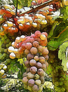 Grape Vineyard Mixed Media Posters - Fertility Poster by Georgi Dimitrov