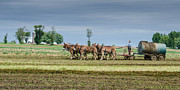 Amish Photographs Art - Fertilizing by Guy Whiteley