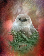 Red And Green Photo Framed Prints - Festive Bushtit Framed Print by Angie Vogel