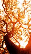 Juan Jose Espinoza - Fibonacci Tree