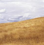 Featured Posters - Field And Sky Near Rock Creek, South Poster by Bert Klassen