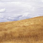 Field And Sky Near Rock Creek, South Print by Bert Klassen