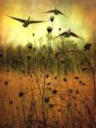 Flying Geese Prints - Field Dwellers  Print by Gothicolors And Crows
