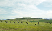 Alberta Foothills Landscape Posters - Field in the foothills Poster by Marlene Ford