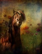 Horse Digital Art Prints - Field Master Print by Dorota Kudyba