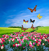 Valentine Art - Field of colorful flowers and butterflies by Photocreo Michal Bednarek