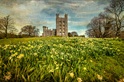Field Of Daffodils Print by Adrian Evans