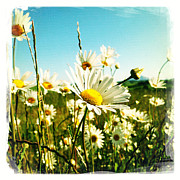 Pretty Flowers Photos - Field of daisies by Les Cunliffe