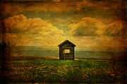 Shed Digital Art Posters - Field of Dandelions Poster by Lois Bryan