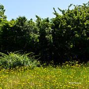 Michelle Wiarda - Field of Dandelions