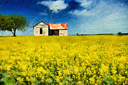 Canola Field Prints - Field of Dreams Print by Betty LaRue