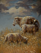 Ovine Framed Prints - Field of Dreams Framed Print by Mia DeLode