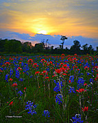 Wild Flowers Of Texas Photos - Field of Flowers by Renee Patterson