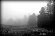 Terri K Designs - Field of fog