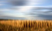 Gloomy Metal Prints - Field of maize Metal Print by Bernard Jaubert