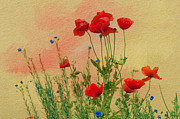 "\""flora Prints\\\"" Posters - Field of poppies Poster by Carolyn Dalessandro"