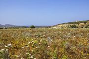 Patricia Hofmeester - Field of spring flowers in Crete