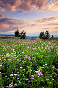 Tuscan Sunset Prints - Field of wildflowers Print by Brian Jannsen