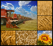 Farm Life Framed Prints Posters - Fields and Grain Collage Poster by Boon Mee