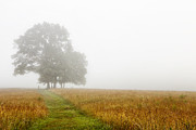 Fields In The Fog Print by Andrew Soundarajan