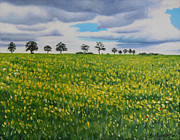 Malmo Paintings - Fields of Eslov by Sue Birkenshaw