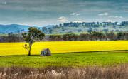 Russ Brown - Fields of Gold