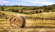 Bales Photo Metal Prints - Fields of Gold Metal Print by Scott Norris