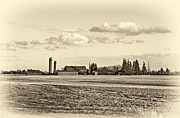 Barn Photos - Fields of Gold sepia by Steve Harrington