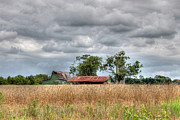 Barns North Carolina Prints - Fields of Golden Grain Print by Benanne Stiens
