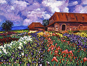 David Lloyd Glover - Fields Of Iris