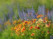 Fields Of Lavender And Orange Blanket Flowers Print by Lingfai Leung
