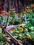 Split Rail Fence Digital Art - Fields of Wawona by John Haldane
