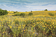 Pastureland Framed Prints - Fields of Yellow Framed Print by Charrie Shockey