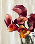 Ana Cole - Fiery Calla Lily
