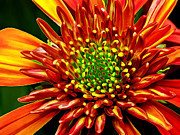 Photomanipulation Photo Prints - Fiery Mum Print by ABeautifulSky  Photography