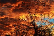 Sharon L Stacy - Fiery October Sky