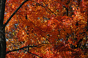 Linda Knorr Shafer - Fiery Red