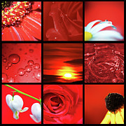 Contemporary Collage Metal Prints - Fiery Red Metal Print by Lisa Knechtel