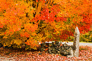 """autumn Foliage New England"" Prints - Fiery rock wall Print by Jeff Folger"