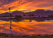 Yuma Prints - Fiery Sunrise Reflections Print by Robert Bales