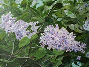 Sheila Howell - Fifty Shades of Lilac